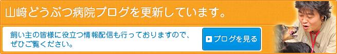 山﨑どうぶつ病院ブログを更新しています。飼い主の皆様に役立つ情報配信も行っておりますので、ぜひご覧ください。