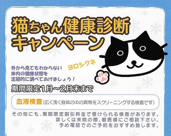 猫ちゃん健康診断キャンペーン