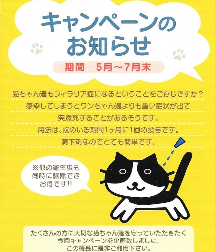 猫ちゃんキャンペーン