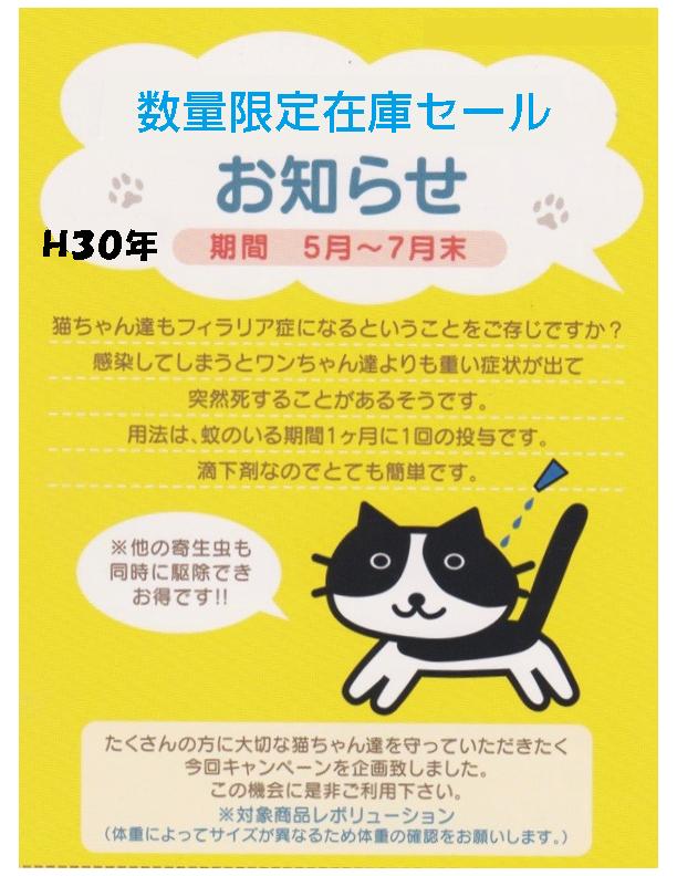 猫ちゃんのフィラリア予防キャンペーン